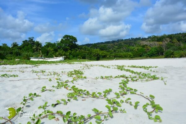 andaman with diglipur mybudgettour 2