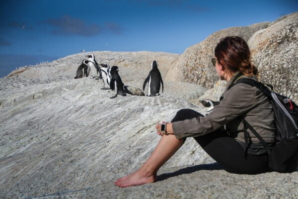 penguins, south africa, cape town